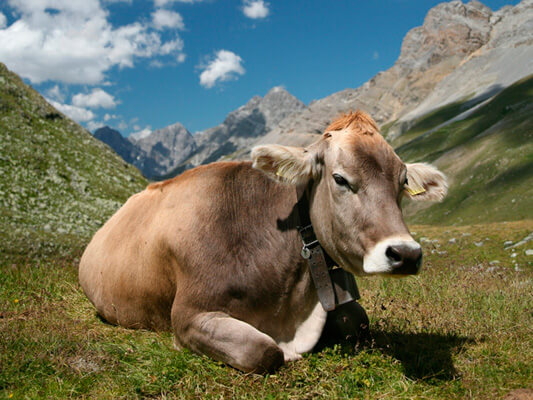 Нормкор маркетинг День корови